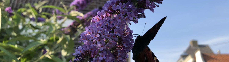 Een vlinder op een waardeplant.