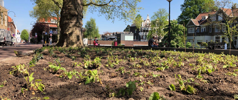 De plantvakken op de vest zijn net aangeplant.