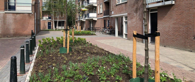 Een groenstrook in het Willem Dreeshof
